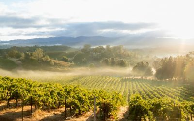 Put it to Sleep Properly: Winterizing Your Irrigation System