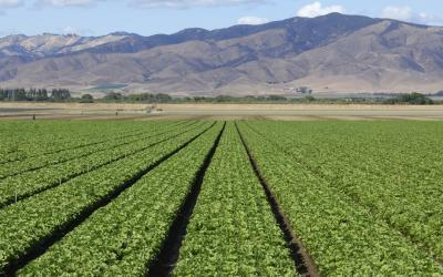 From Field to Table: The Evolution of Food Safety