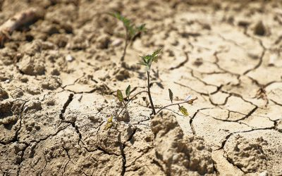 Beat the Drought: Making Certain that Every Drop Reaches your Crop