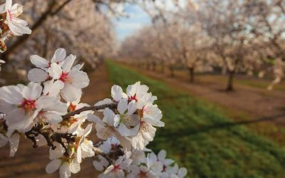 The State of The Almond Industry
